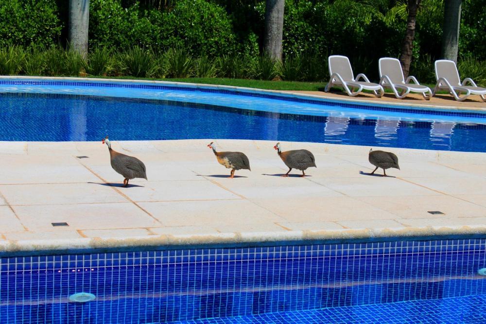 Alugar Residencial / Casa em Condomínio em Marília apenas R$ 6.000,00 - Foto 53